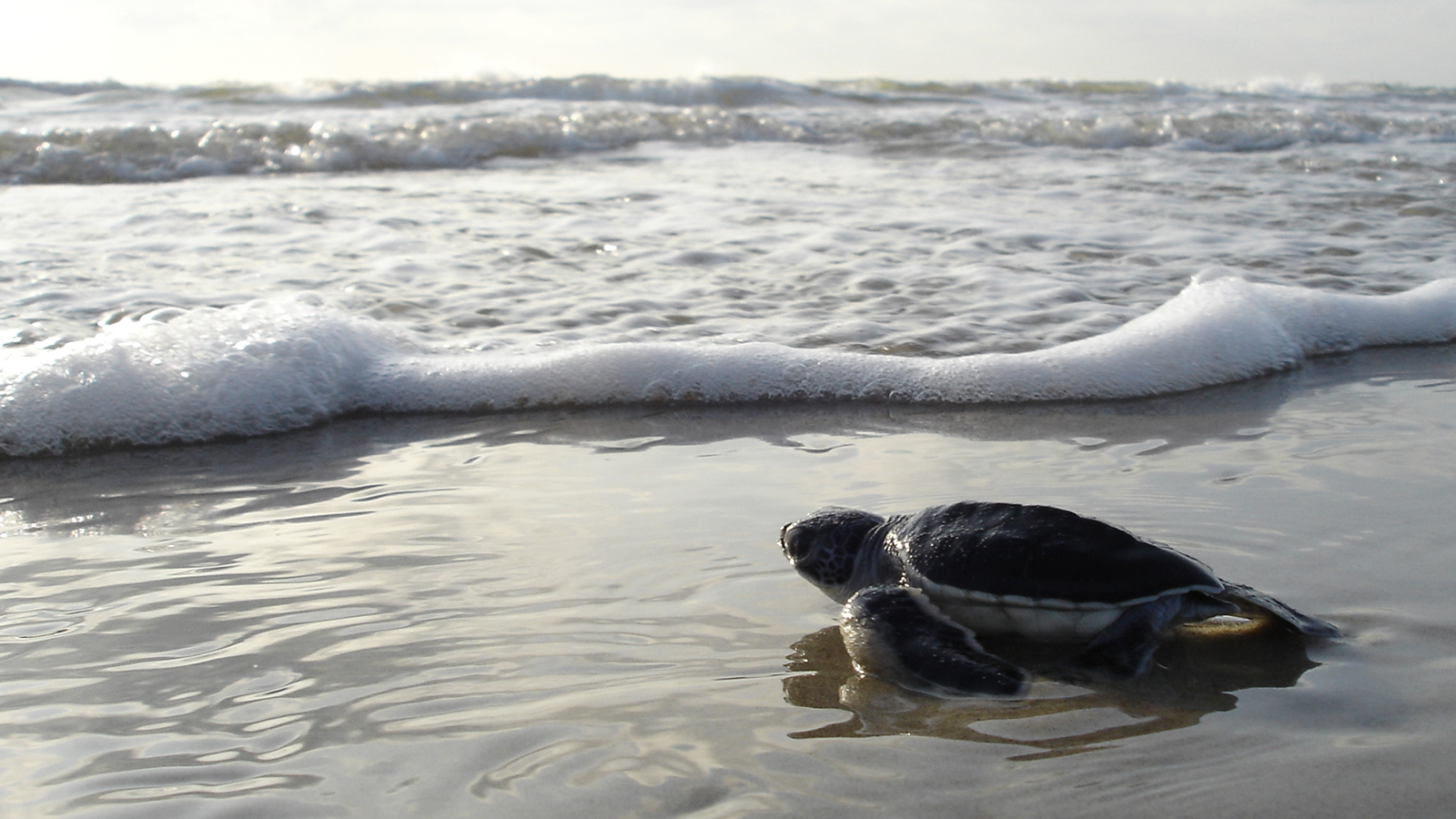 <h4>ENVIRONMENTAL DEFENSE: OUR OCEANS</h4><h5>Goal: We must defend our oceans, marine wildlife and beaches by stopping new offshore drilling and more.</h5><em>NPS Photo</em>